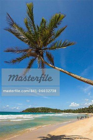 Palme und West Point an der Südküste Wale beobachten Surf Beach in Mirissa, in der Nähe von Matara, Südprovinz in Sri Lanka, Asien