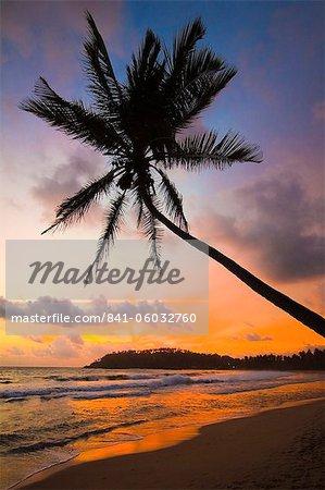 Arbre coucher de soleil et de la paume et le point ouest de la plage de surf de la côte sud à Mirissa, près de Matara, Province du Sud, Sri Lanka, Asie