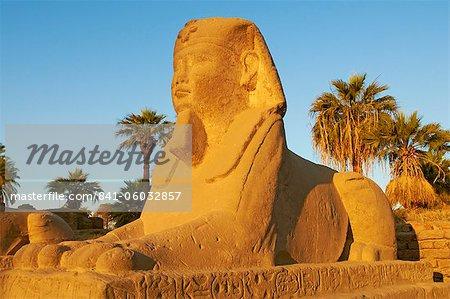 Chemin du Sphinx, Temple de Louxor, Thèbes, patrimoine mondial de l'UNESCO, Egypte, Afrique du Nord, Afrique