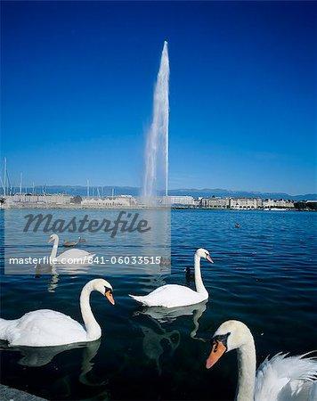 Swans below the Jet d'eau (water jet), Geneva, Lake Geneva (Lac Leman), Switzerland, Europe