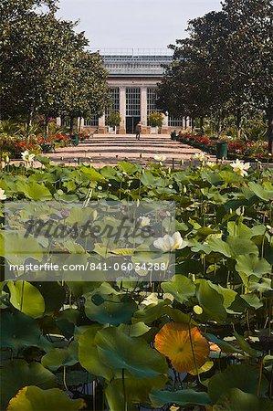 Lis de l'eau dans les Jardins Botanique (jardin botanique), Tours, Indre et Loire, Centre, France, Europe