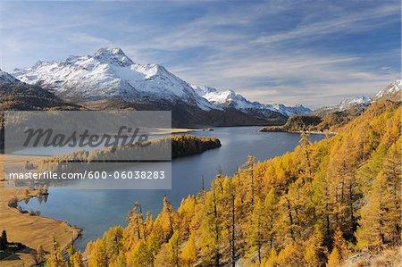 Lake Sils with Trees in Autumn, Piz da la Margna, St Moritz, Maloja District, Engadin, Graubunden, Switzerland