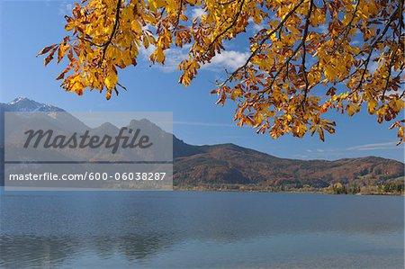 Autumn Foliage. Kochelsee, Kochel am See, Bad Tolz-Wolfratshausen, Upper Bavaria, Bavaria, Germany