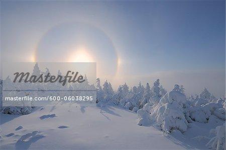 Halo sur la neige couverte d'arbres, Fichtelberg, Erzgebirge, Saxe, Allemagne