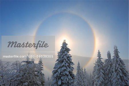 Halo et neige couverte d'arbres, Fichtelberg, Erzgebirge, Saxe, Allemagne