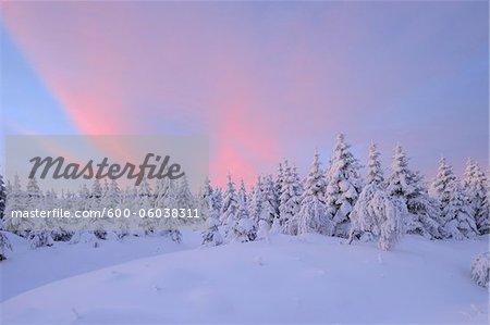Snow Covered arbres au lever du soleil, Fichtelberg, Erzgebirge, Saxe, Allemagne