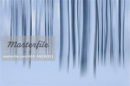 Snow Covered troncs d'arbres dans la forêt, Rhoen, montagnes Rhon, Hesse, Allemagne