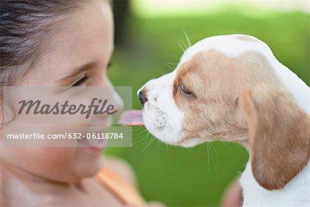 Chiots Beagle léchant le nez de la jeune fille