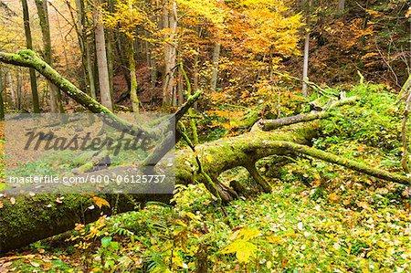 Monbachtal, Schwarzwald, Baden-Württemberg, Deutschland