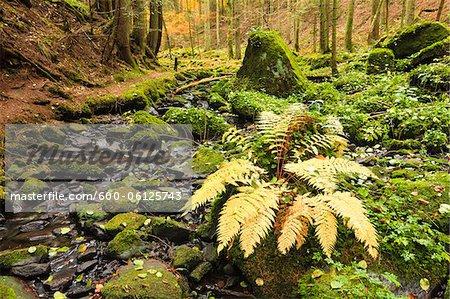 Stream, Monbachtal, Black Forest, Baden-Wurttemberg, Germany