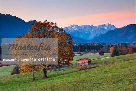 Eiche Baum und Scheune vor Wettersteingebirge und Zugspitz-Bereich bei Sonnenaufgang, Oberbayern, Deutschland