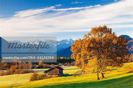 Eiche Baum und Scheune vor Wettersteingebirge und Zugspitz Range, Oberbayern, Deutschland