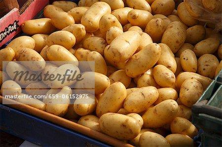 Pommes de terre biologiques au marché fermier à Bantry, Irlande