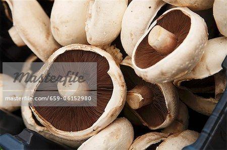 Champignons portobella dans une caisse au marché de l'agriculteur ; Irlande : Bantry