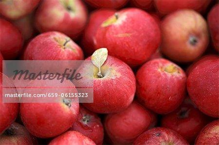 Quantité de pommes rouges assortis