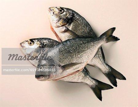 Three bass