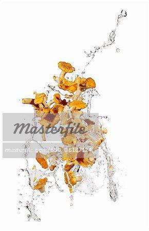 Chanterellles avec une éclaboussure de l'eau