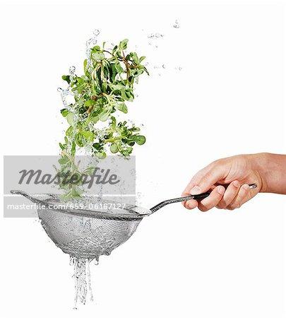 Washing purslane in a colander