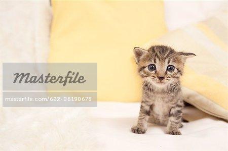 Chat domestique, contact avec les yeux