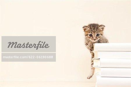 Chat domestique derrière la pile de livres
