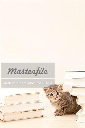 Chat regardant à travers la pile de livres