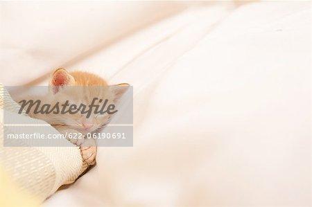 Cat Sleeping In Blanket