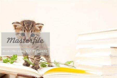 Chat domestique à livre ouvert à côté de la pile de livres