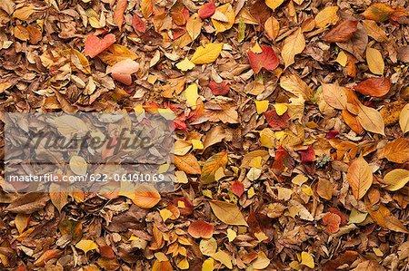 Feuilles tombées, automne, fond