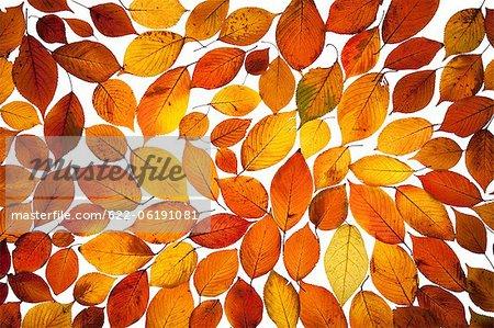 Feuilles de l'automne allumé, arrière-plan