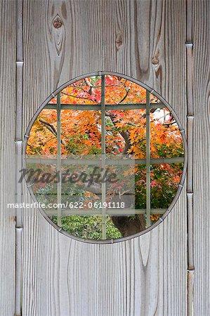 Round Window With Autumn Tree