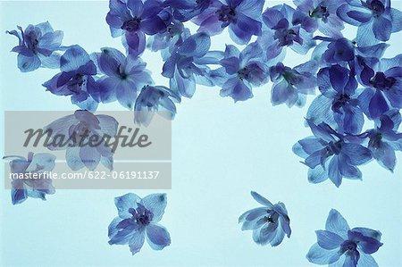 Fleurs bleues lumineuses flottantes