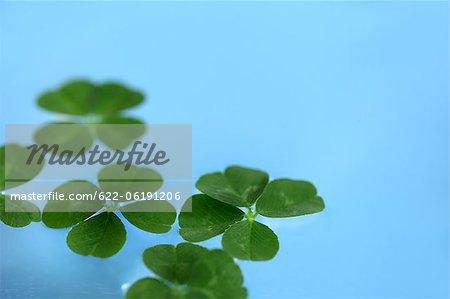 Lumineux trèfle à quatre feuilles sur fond bleu