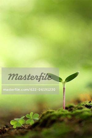 Sapling, New Plant