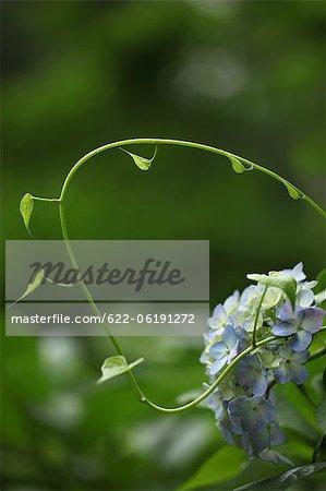Neue Pflanze mit Blättern und Blumen