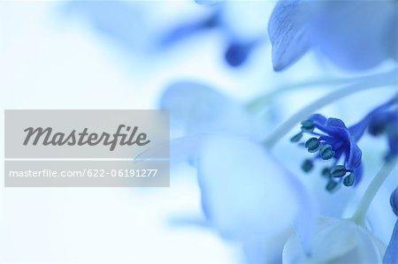 Vue rapprochée de la fleur bleue