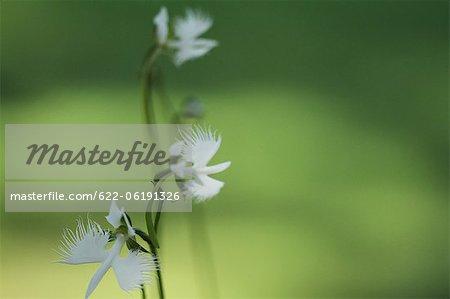 Gros plan de fleurs avec Green arrière-plan flou