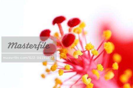 Fleurs, gros plan, Image Macro