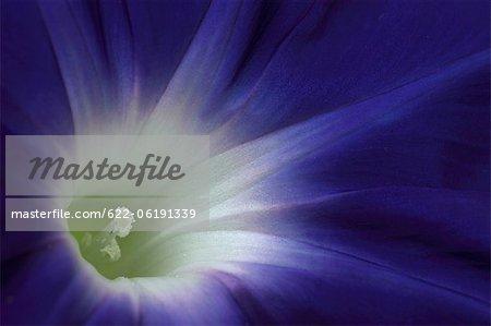 Extrême gros plan de fleurs, images de Macro