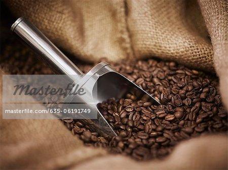 Sac de jute avec pelle et grains de café