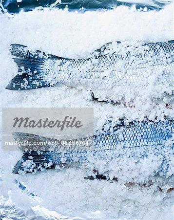 Deux bass dans le sel