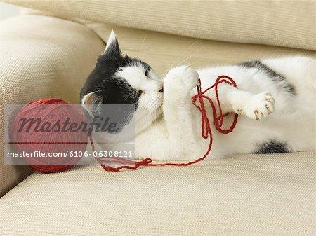 Katze mit Ball der Zeichenfolge.
