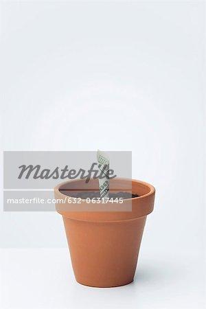 One-hundred dollar bill planted in flower pot