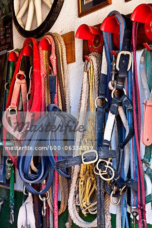 Horse Tack Hanging on Hooks