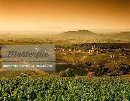 Paysage rural entre Vinzelles et Saint-Amour-Bellevue, Saône-et-Loire, Bourgogne, France
