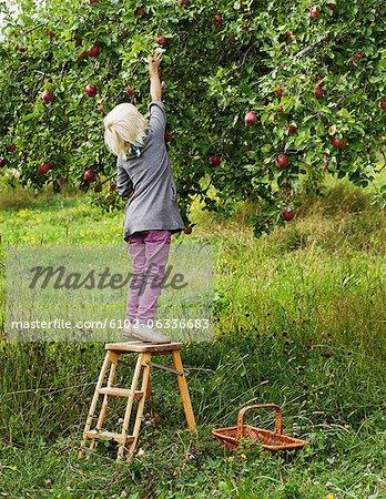 Cueillette des pommes blonde