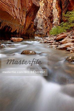 Cascade dans le goulet de la Virgin River, Zion National Park, Utah, États-Unis d'Amérique, l'Amérique du Nord
