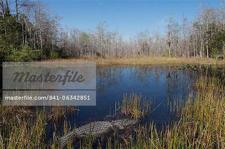 Parc National des Everglades, UNESCO World Heritage Site, Floride, États-Unis d'Amérique, l'Amérique du Nord