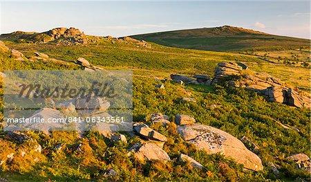 Soleil du soir faible s'allume les landes rocheuses menant à selle Tor et Rippon Tor à l'horizon, Parc National de Dartmoor, Devon, Angleterre, Royaume-Uni, Europe