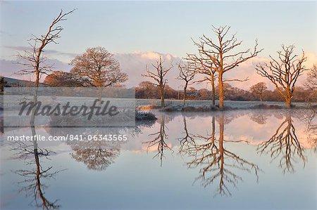 Frostigen Bedingungen im Morgengrauen neben einem Teich im Lande, Morchard Road, Devon, England, Vereinigtes Königreich, Europa