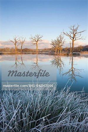 Arbres reflètent dans un étang de pêche de miroir-encore un matin d'hiver glacial, Gex Road, Devon, Angleterre, Royaume-Uni, Europe